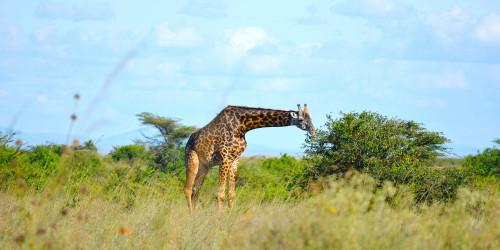16 причин, по которым вам стоит поехать в Кению прямо сейчас