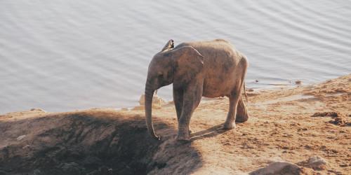 10 фактов, которые надо знать перед поездкой в Зимбабве