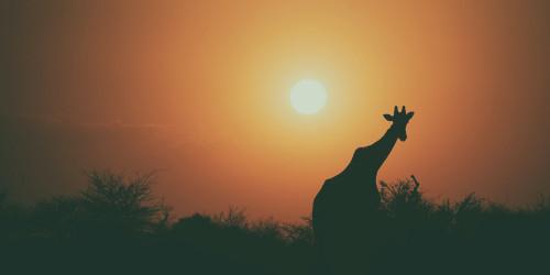 10 фактов, которые надо знать перед поездкой в Буркина Фасо