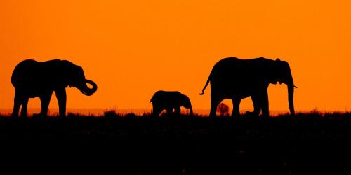 13 причин, по которым вам стоит поехать в Ботсвану прямо сейчас