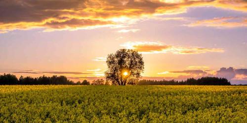 15 причин, по которым вы должны поехать в Тарту