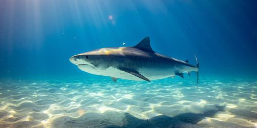 Летающая акула в Оксфорде
