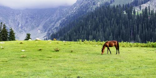 14 причин, по которым вам стоит и не стоит ехать в Пакистан прямо сейчас