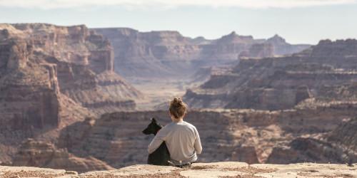 Как путешествовать с домашними животными?